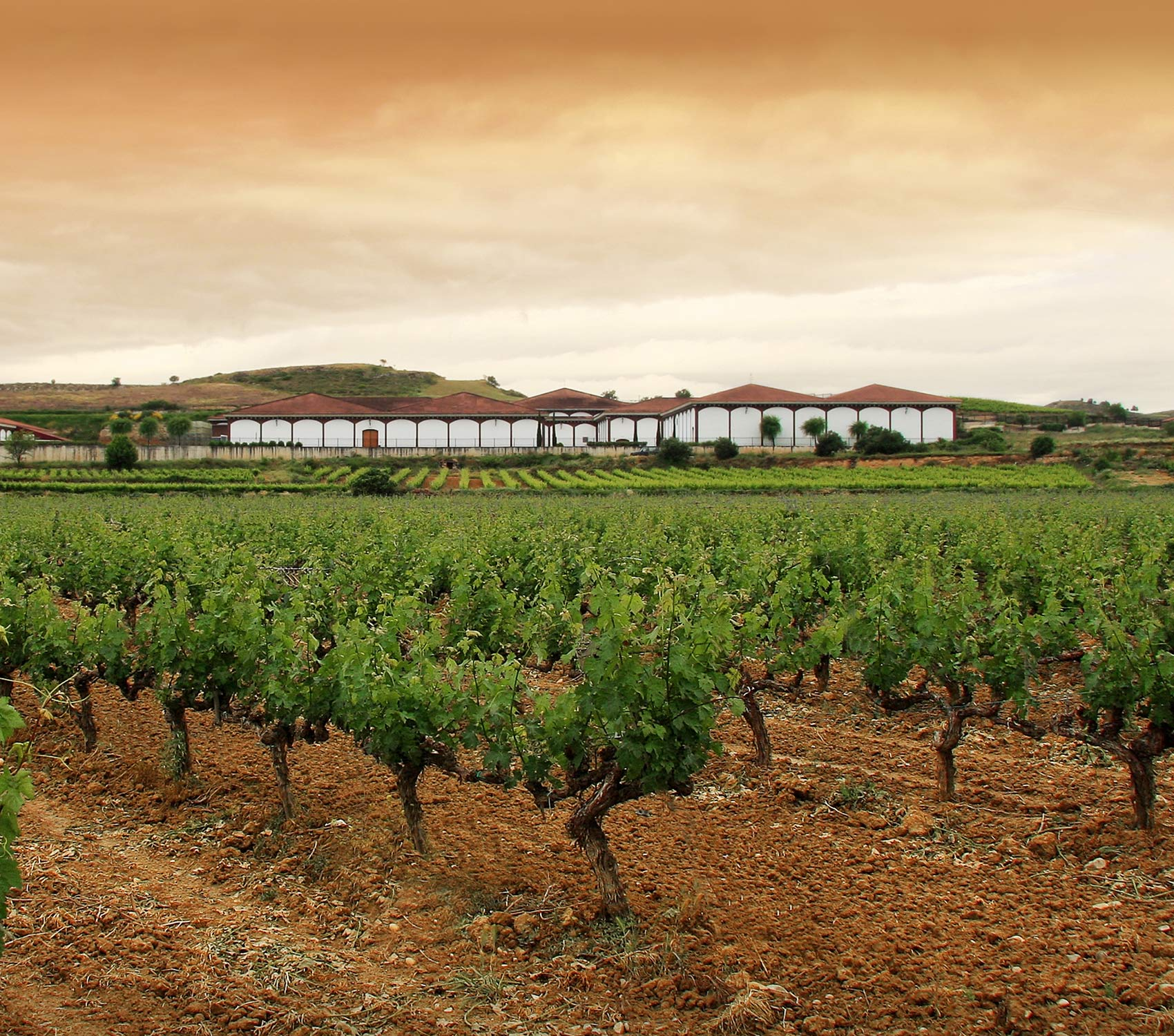 El Coto de Rioja cellar and vineyards